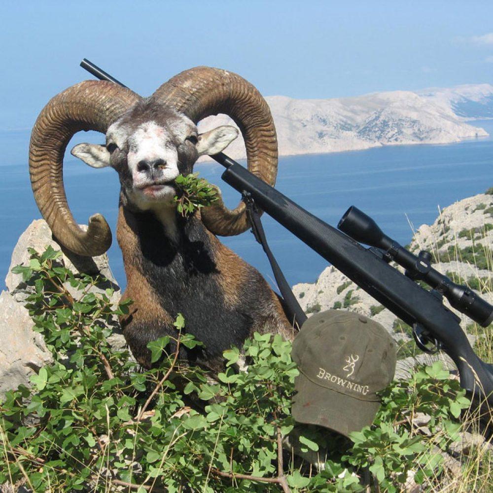 Mouflon-Ram-hunting1